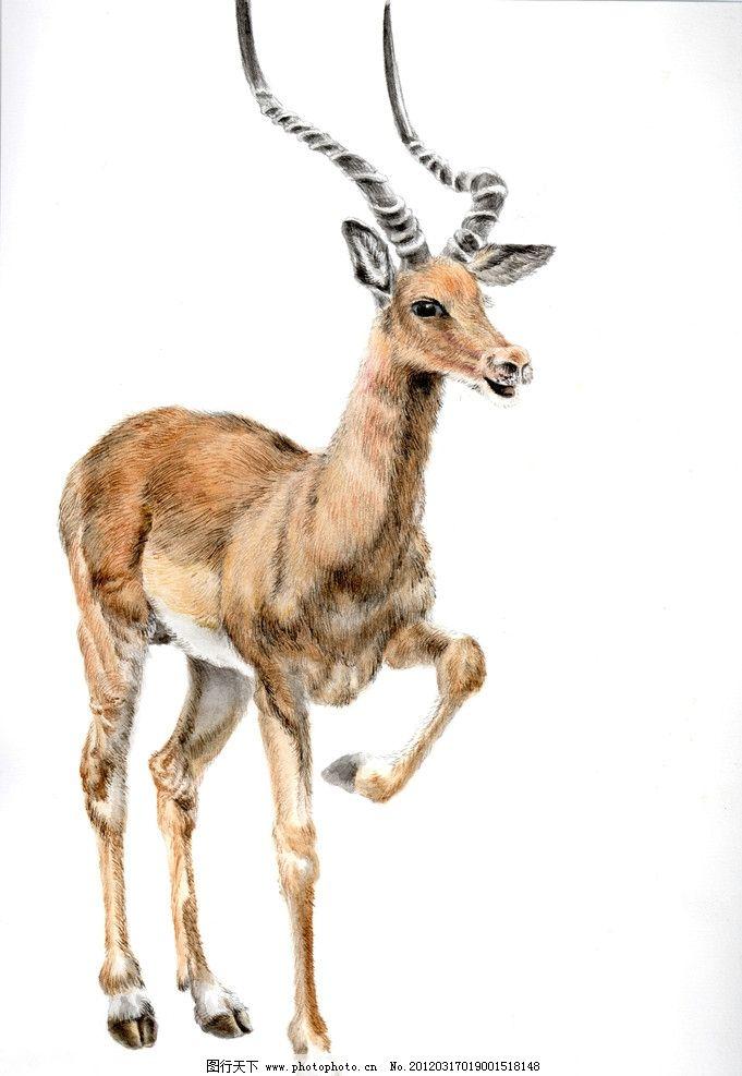 鹿的圆珠笔画