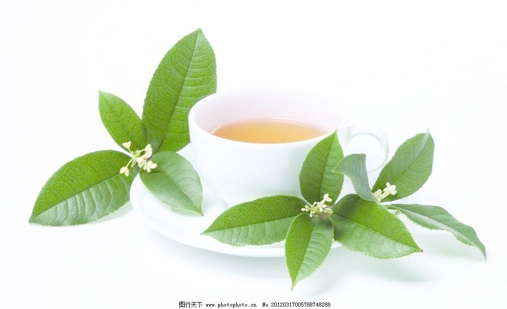 杯子 茶水 茶叶 桂花 餐具厨具 餐饮美食 摄影 300dpi     矢量图