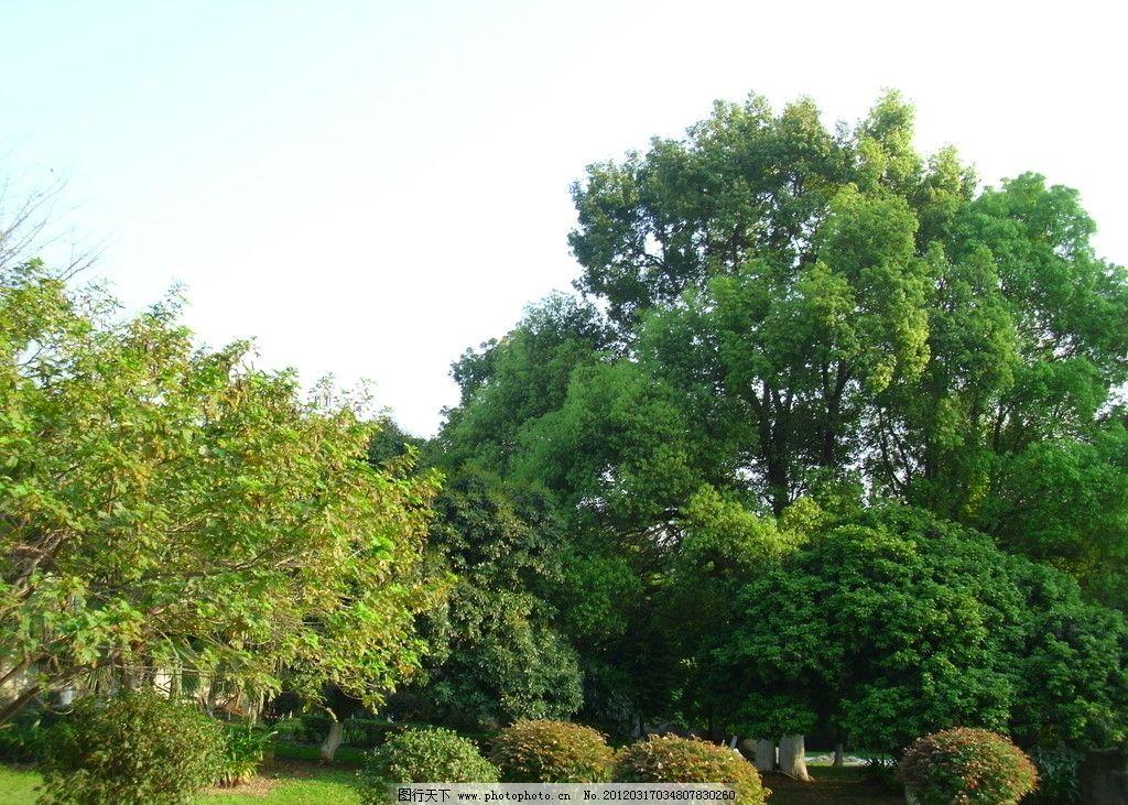 森林风景 森林 树木 山水 风景 蓝天 白云 自然风景 自然景观 摄影 96