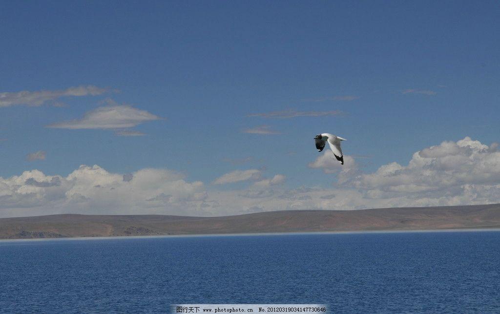 海洋 小鸟 蓝天 白云 水面 旅游图 自然风景 旅游摄影 摄影