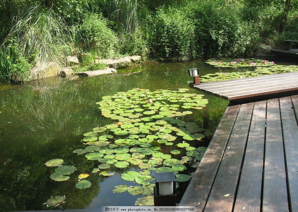 小区景观 小区 木桥 浮萍 绿水 植物 水草 园林建筑 建筑园林 摄影