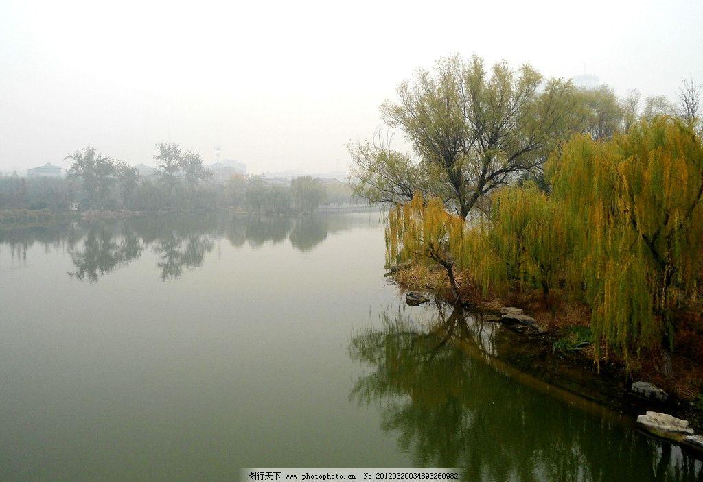 大明湖的柳树图片