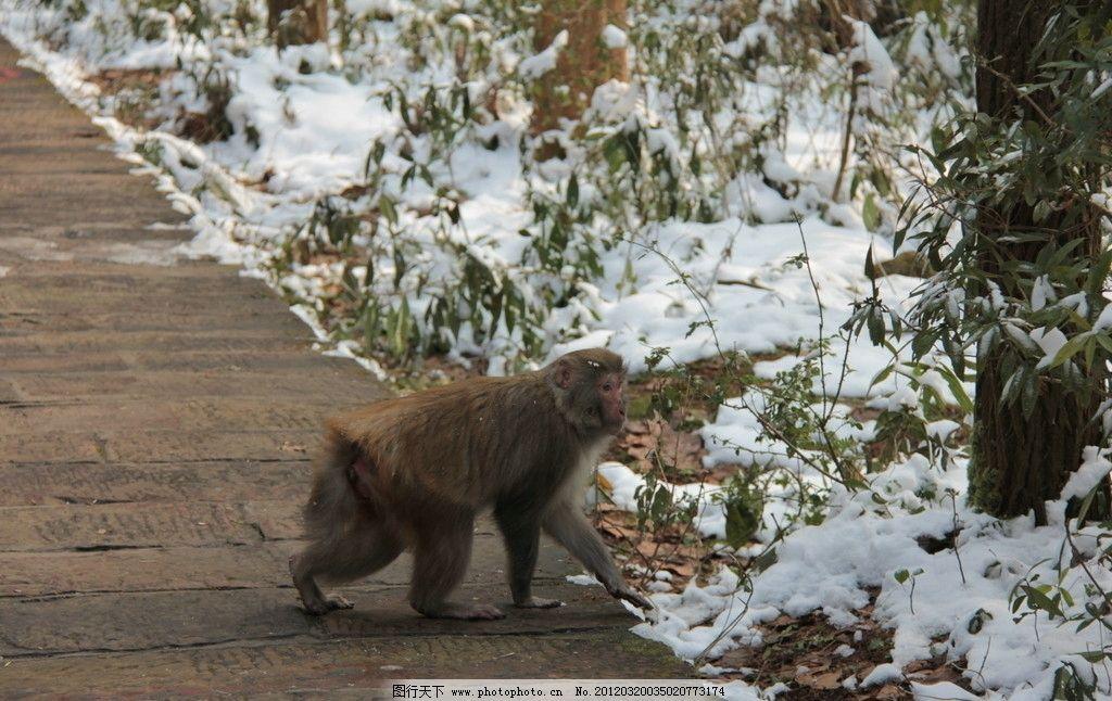 可爱猴子风景图片