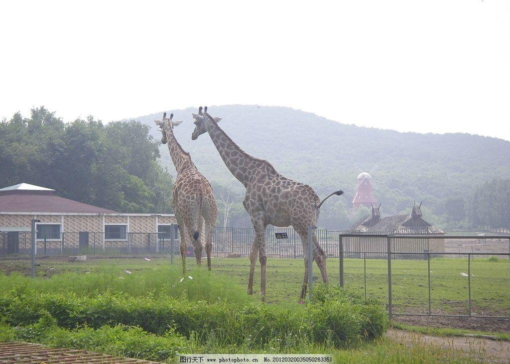 长劲鹿 山峦 绿树 房子 小鹿 绿草 绿地 天空 野生动物 生物世界 摄影