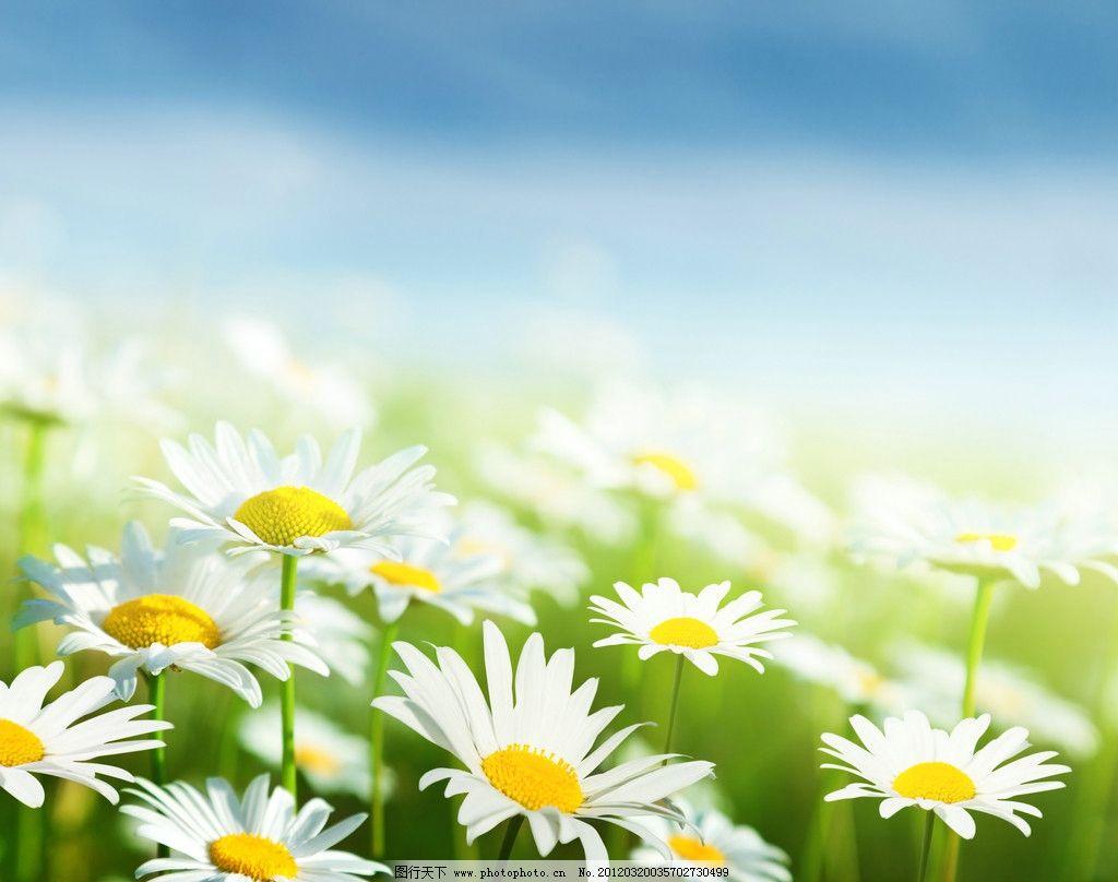 雏菊与阳光手绘图片