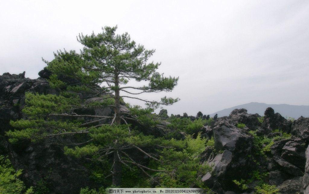 自然风景 大树 树 松树 高树 大石 石头山 绿色景观 自然景观 摄影
