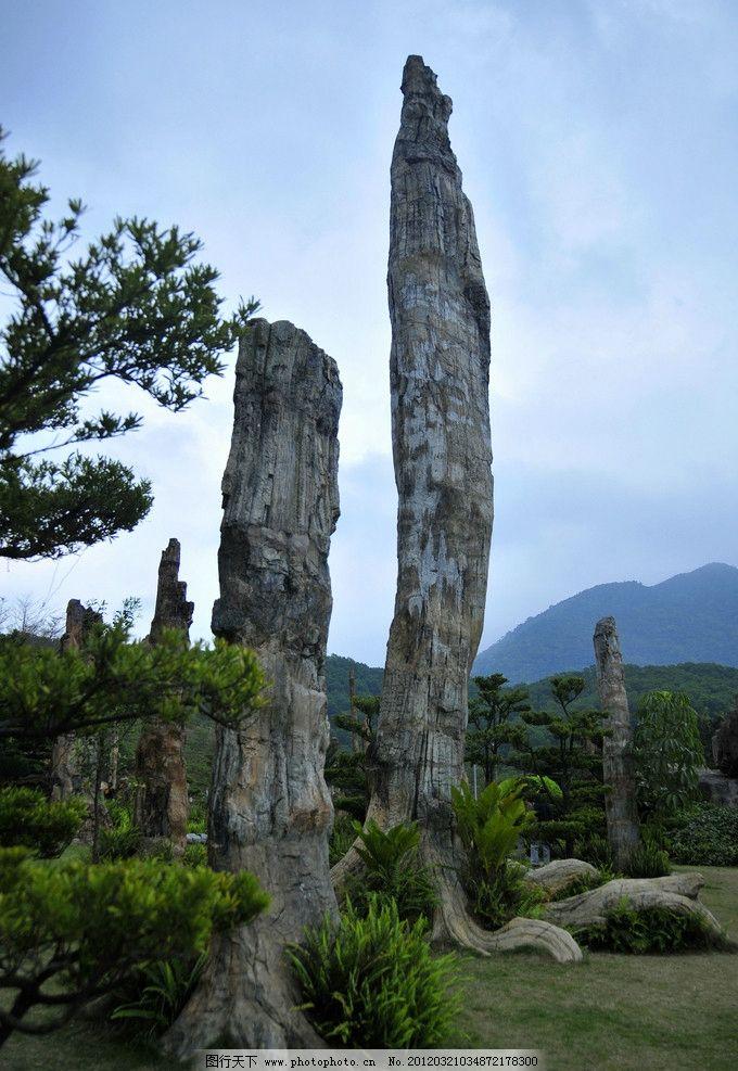 古生物化石树图片_自然风景_自然景观_图行天下图库