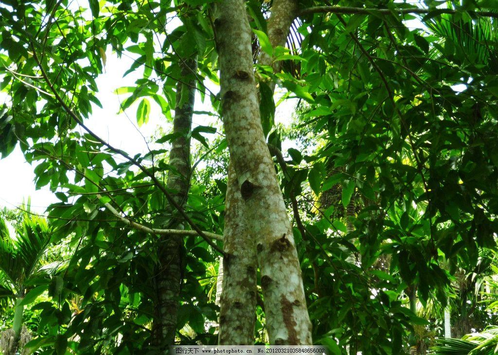 海南热带雨林 绿树 热带雨林 海南旅游 树木树叶 生物世界 摄影 220