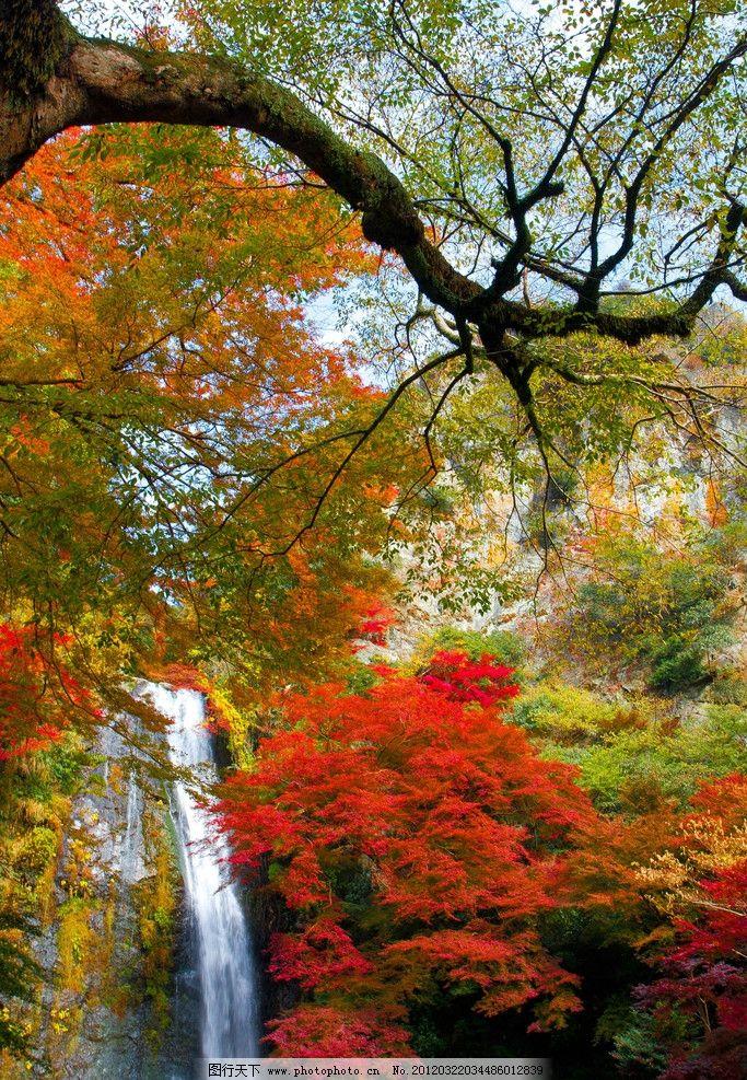 秋日瀑布 秋天 瀑布 流水 红色 树丛 山林 森林 山水风景 自然景观