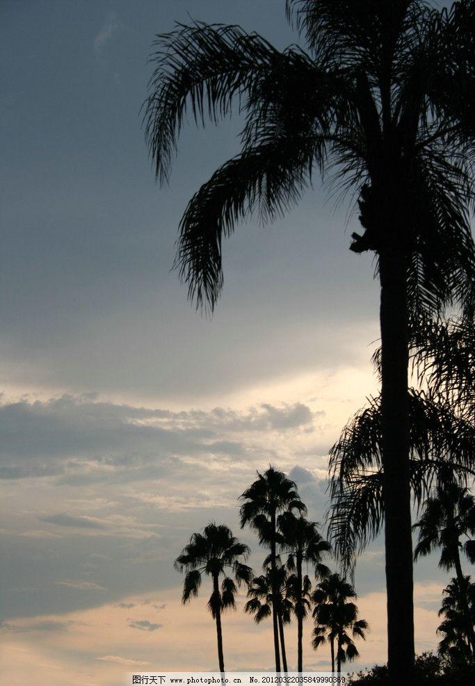 热带椰子树 落日 夕阳 日出 摄影