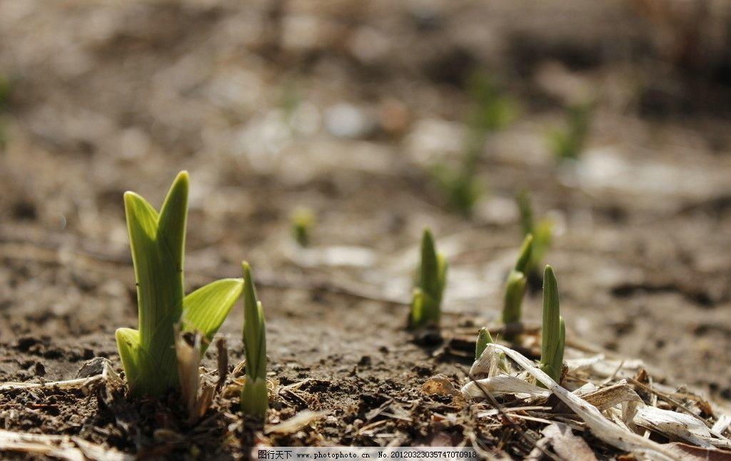 春天发芽美的图片