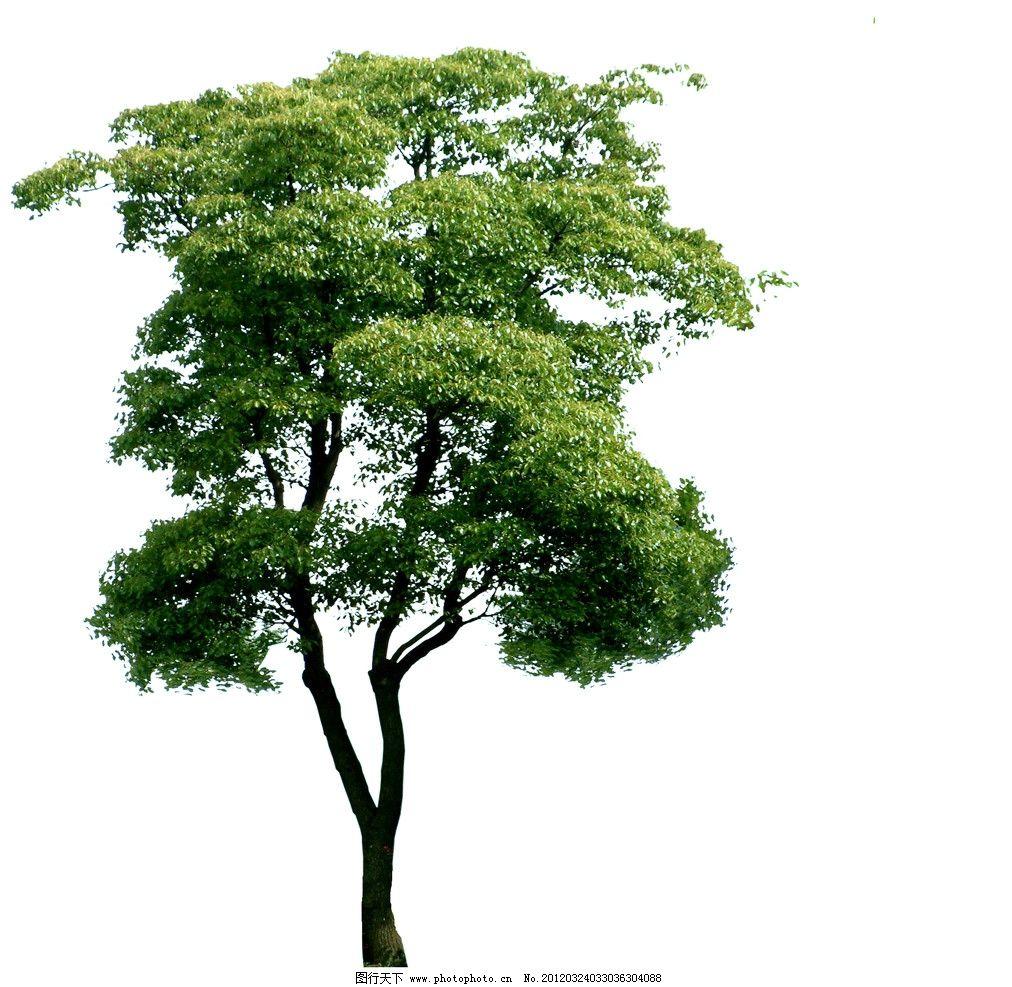 大树 树素材 环境设计 各种树 树 花草树木 psd分层素材 源文件 300dp