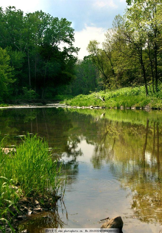 热带丛林风光 雨林 风景 景色 景观 大树 树木 绿树 小河 小溪