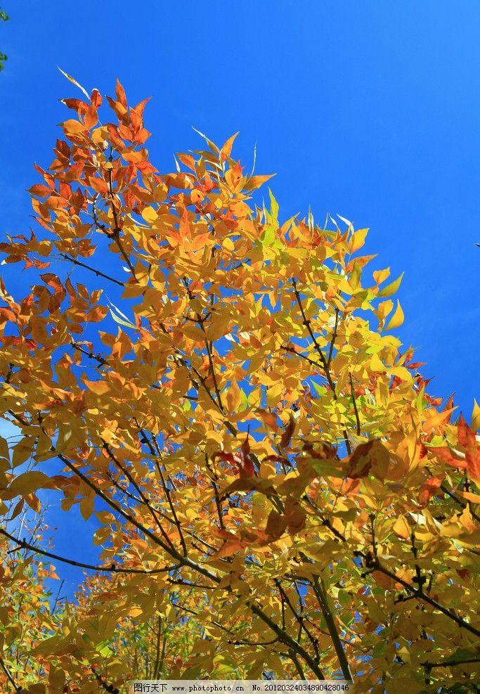 树叶摄影 白云 蓝天 树叶 自然风光 自然风景 自然景观 摄影 72dpi