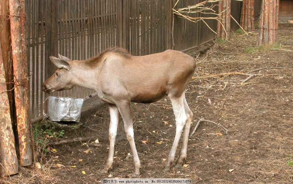 动物特写 动物 珍惜 保护 农场 野生动物 生物世界 摄影 300dpi jpg