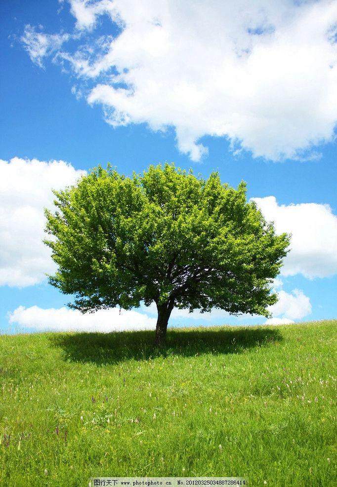 蓝天白云 草地 天空 树木 自然风景 自然景观 摄影