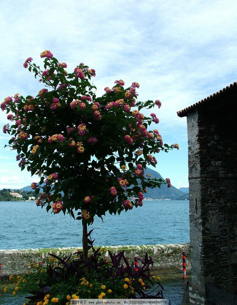 大海 风光 风景 景色 景观 鲜花 树木 花朵 建筑 木头房子 小木屋