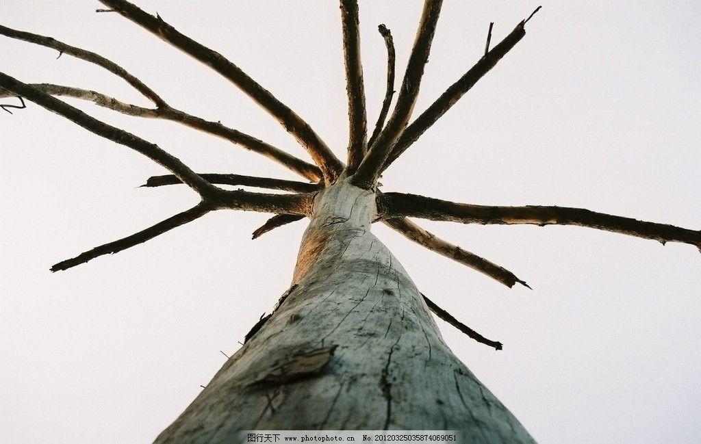 大树摄影 大树 树木 树干 树枝 树木树叶 生物世界 摄影 72dpi jpg