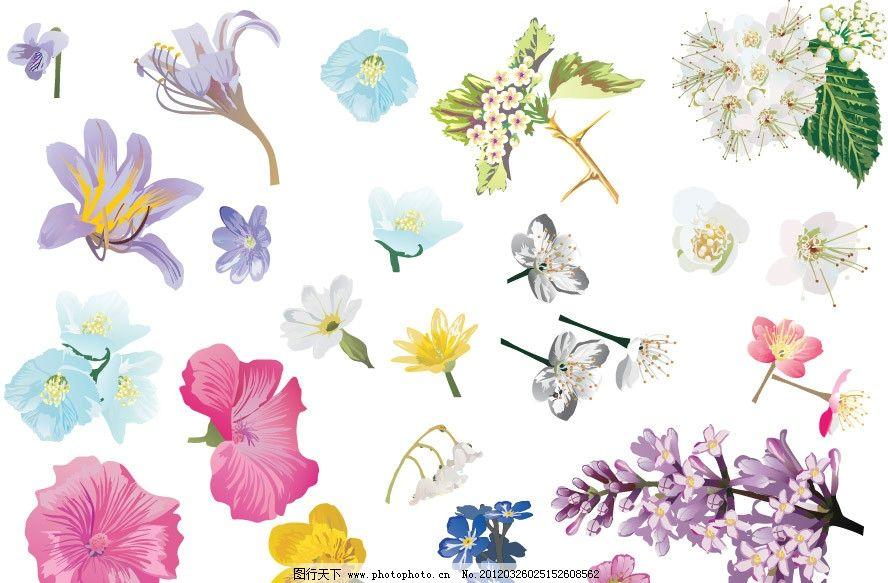手绘鲜花矢量图片