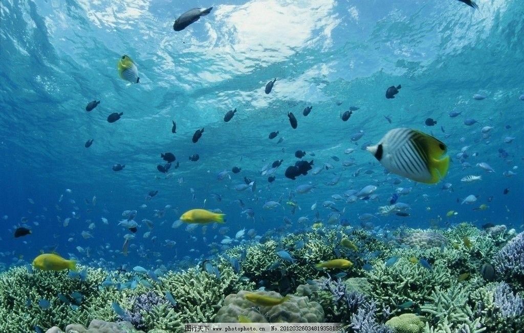 海底世界 大海 深海 珊瑚 热带鱼 自然风景 自然景观 摄影 72dpi jpg