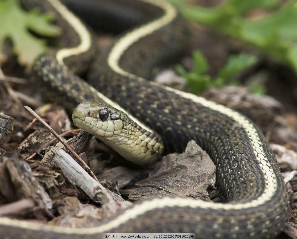小蛇 野生 动物 青蛇 野生动物 生物世界 摄影