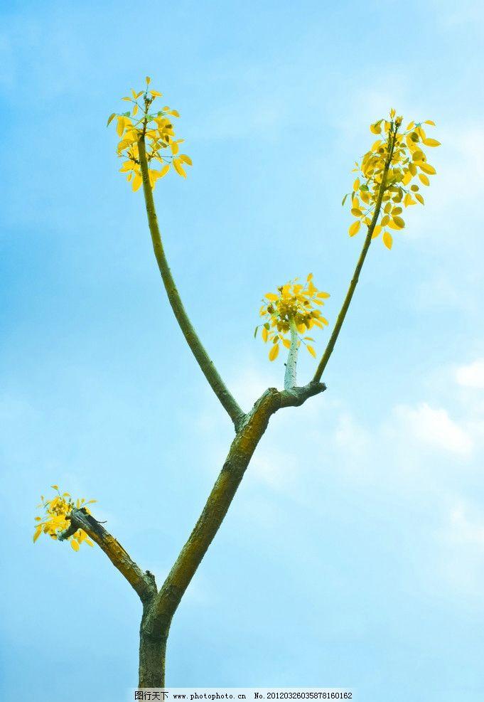 春天 发芽 小树 枝头 天空 树木树叶 生物世界 摄影 300dpi jpg