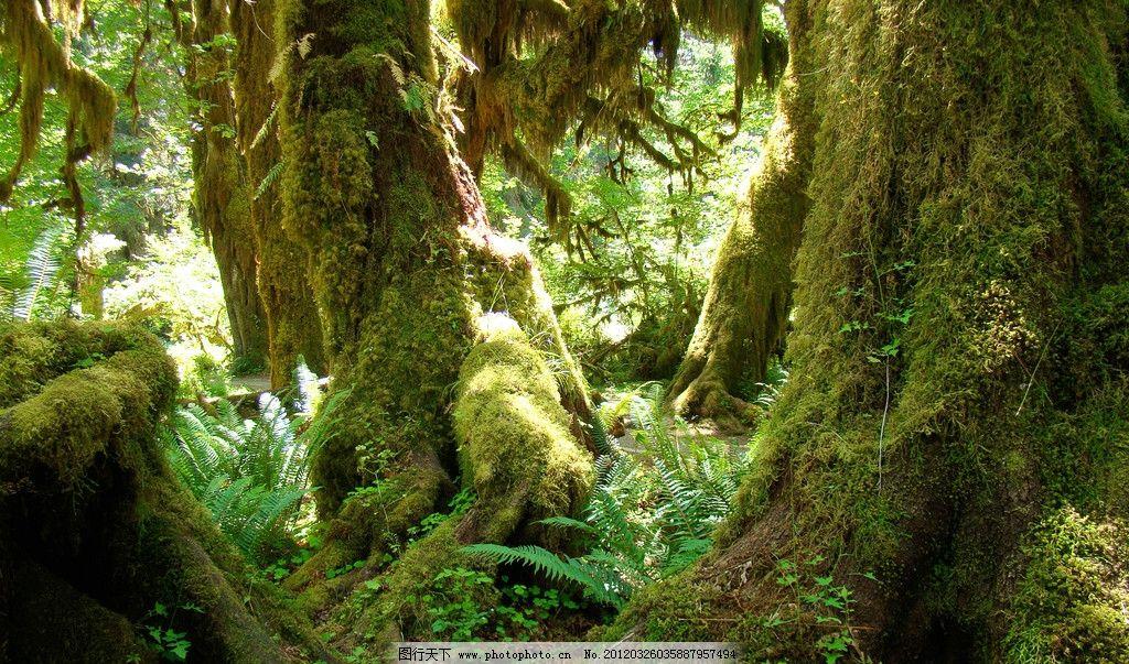 原始森林 树林 草 自然 风景 背景 壁纸 摄影