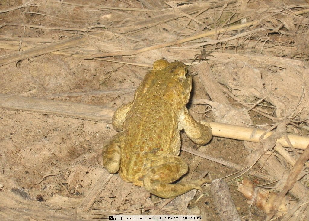 蛙蛛对决 青蛙 蜘蛛 野生动物 生物世界 摄影