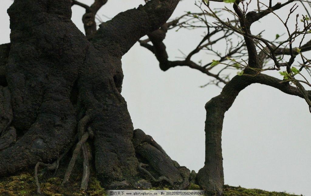 树根 枯树 大树 树杈 树木树叶 生物世界 摄影 72dpi jpg