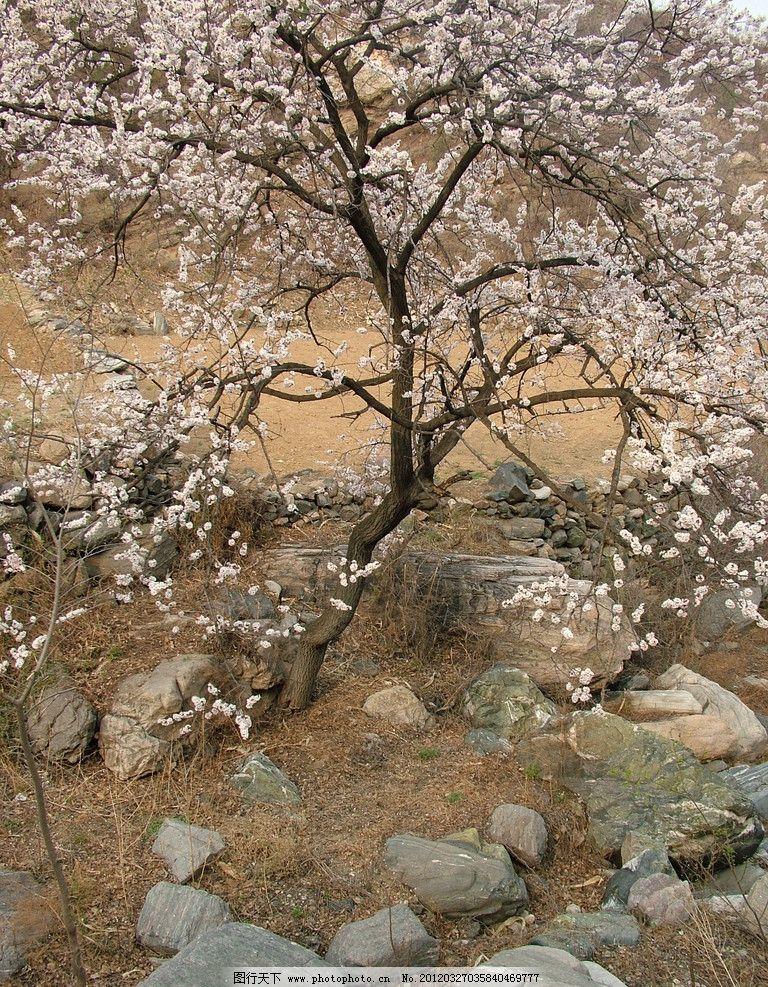 桃花 花树 山花 花卉 桃树 植物摄影 树木树叶 生物世界 摄影 72dpi