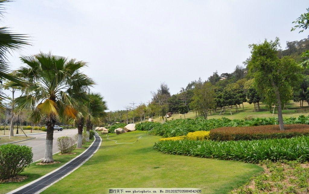 草坪 公园 山庄 公园景观参考图片 自然风景 自然景观 摄影 厦门绿化