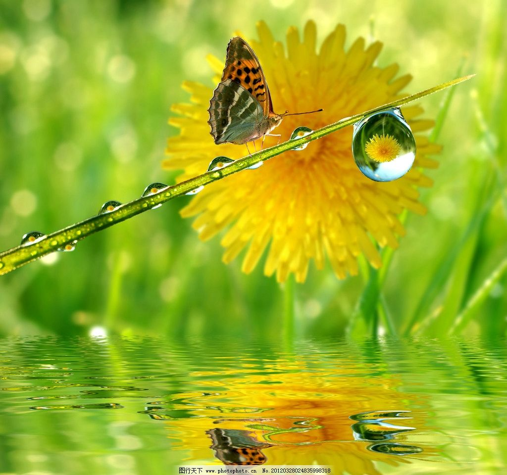 美丽的大自然风景图片