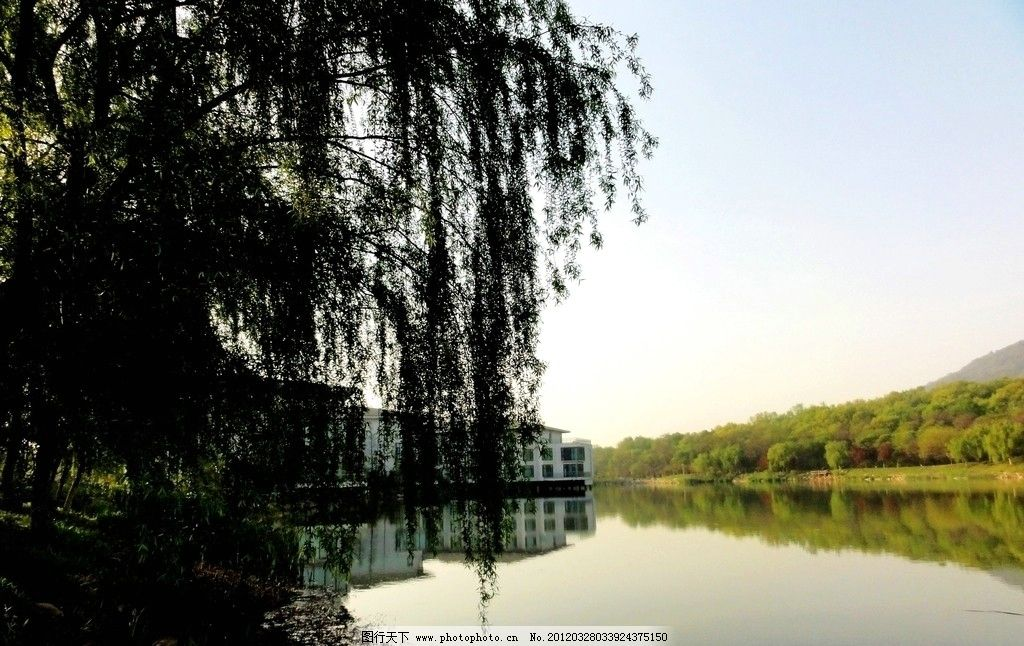 垂柳 南京紫金山庄 湖水 山 宾馆 草木 南京紫金山庄风景 国内旅游 旅