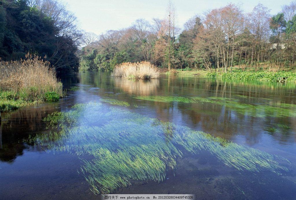 水草 房子 绿叶 芦苇 倒影 蓝天 高清 背景 风景 山水风景 自然景观