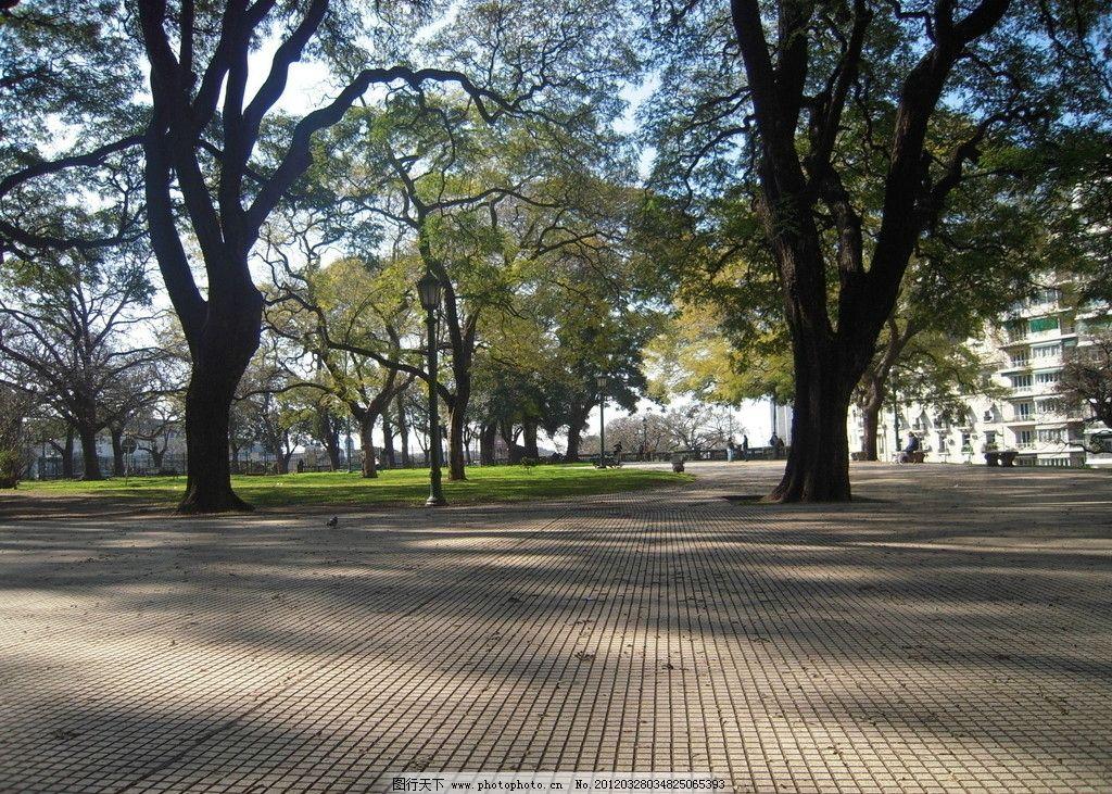 自然风景 树林 草地 地砖 平地 阳光 光影 绿树 植物 自然景观