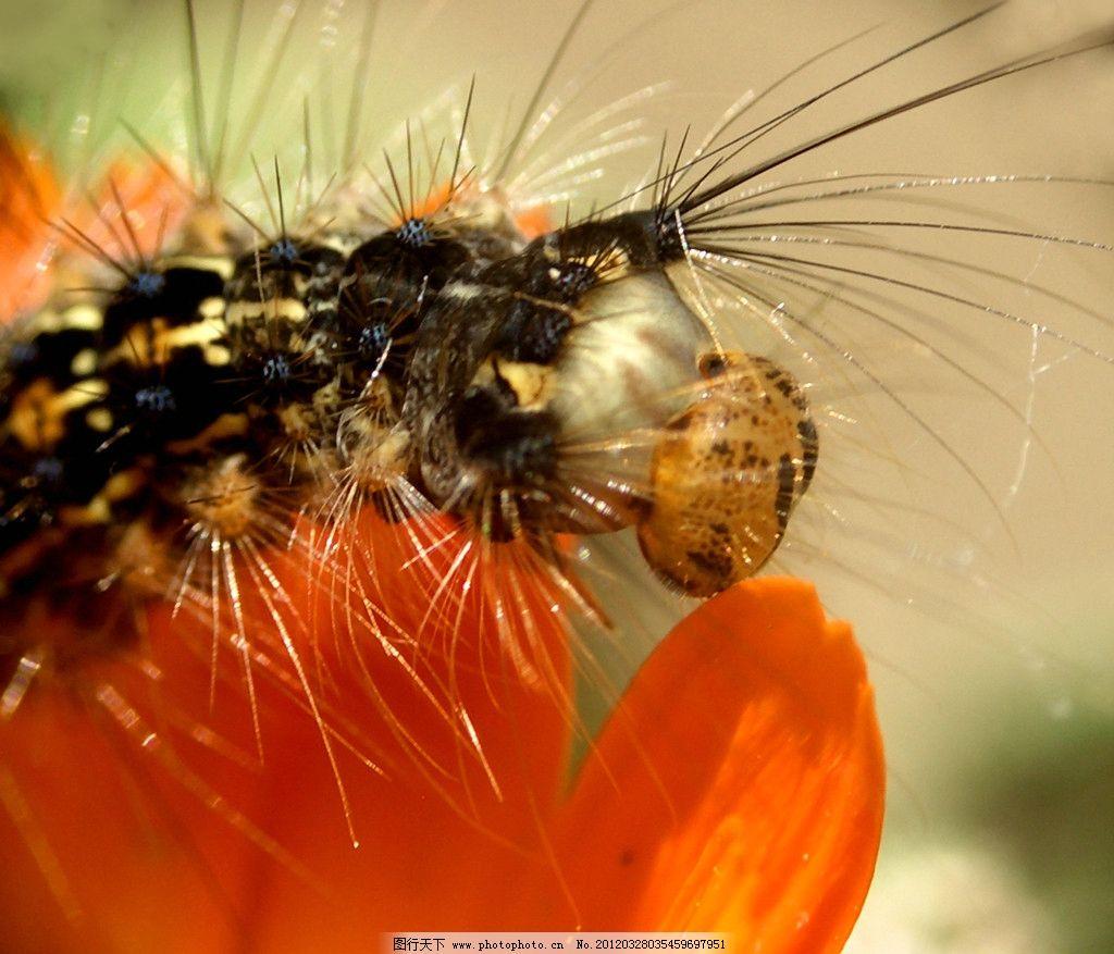 毛毛虫 虫子 昆虫 贴树皮 小花 鲜花 花朵 花心 花蕊 昆虫虫子 生物