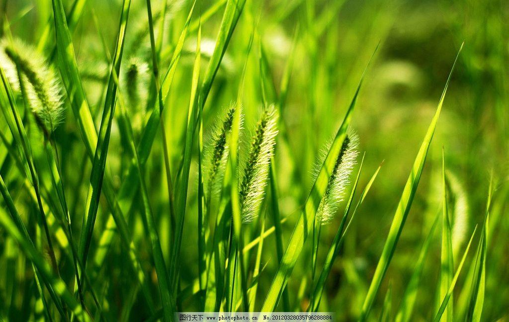 壁纸 草 成片种植 风景 绿色 植物 种植基地 桌面 1024_648