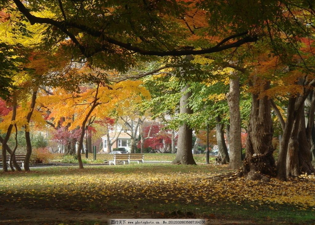 枫叶 红叶 枫树 树木 树林 秋天 树木树叶 生物世界 摄影 72dpi jpg