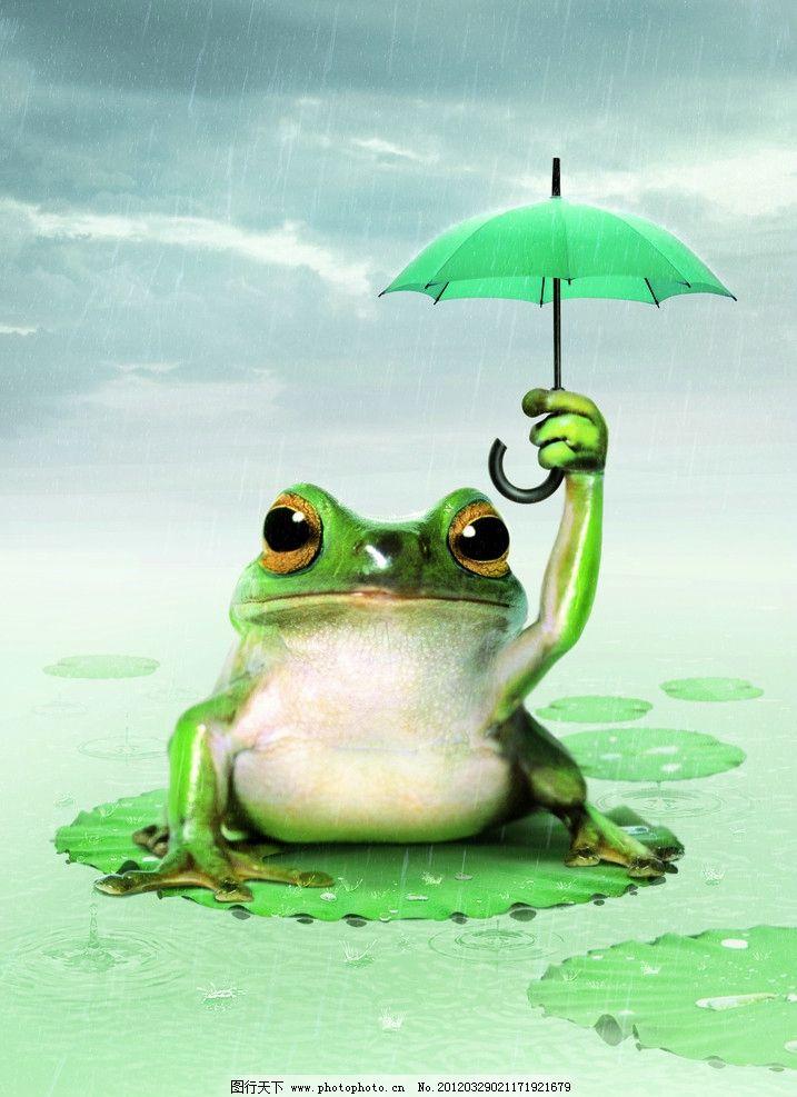 动物青蛙 野生动物 唯美图片 天空 雨伞 水 荷叶