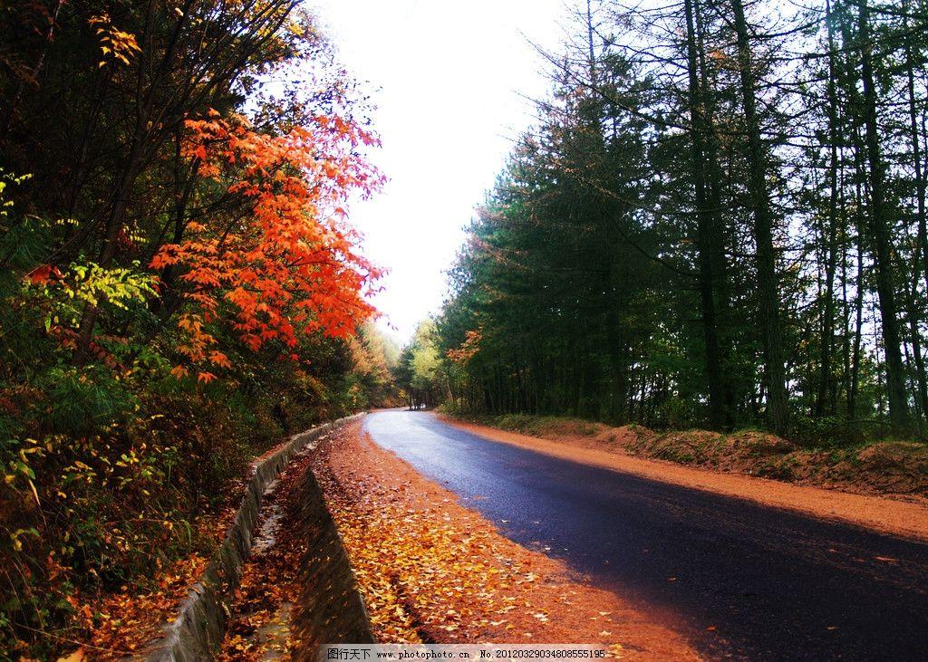 红叶 公路 秋天 树林 道路 自然风景 自然景观 摄影