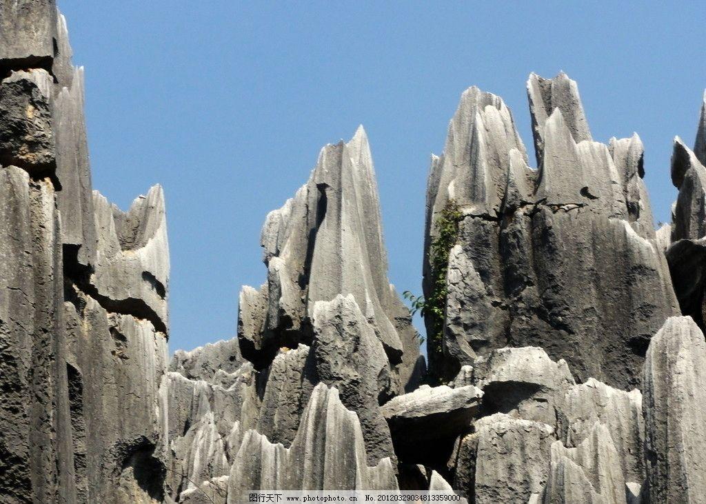 云南石林风光 怪石 绿色植物 蓝天 自然风景 自然景观 摄影 72dpi jpg