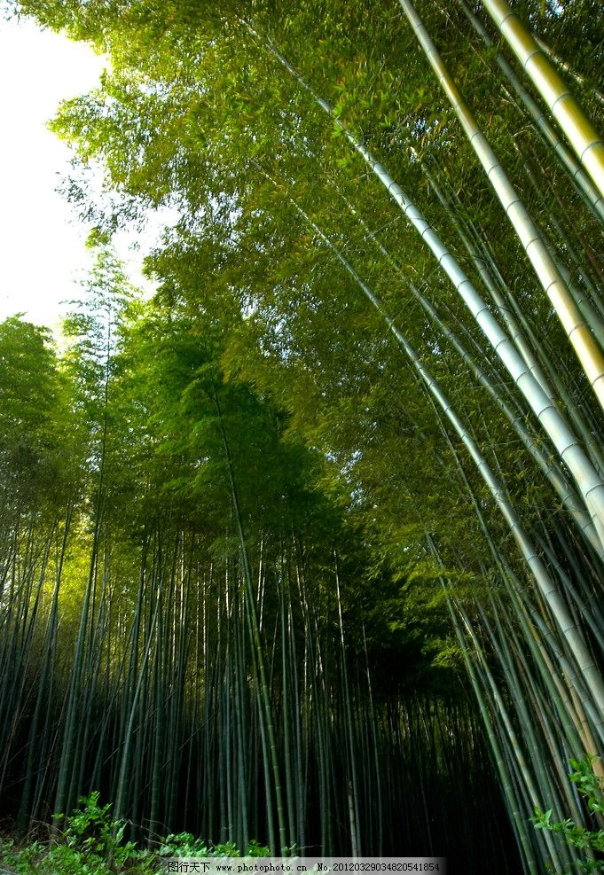 竹林图片图片