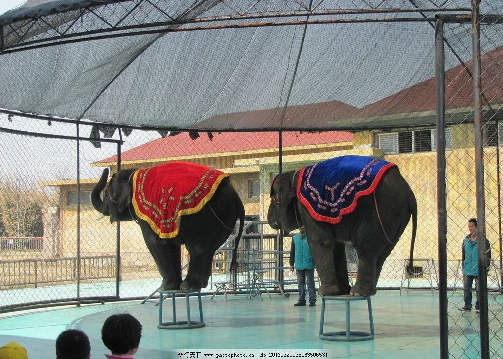 马戏团 动物园 大象 马戏表演 野生动物 生物世界 摄影 180dpi jpg