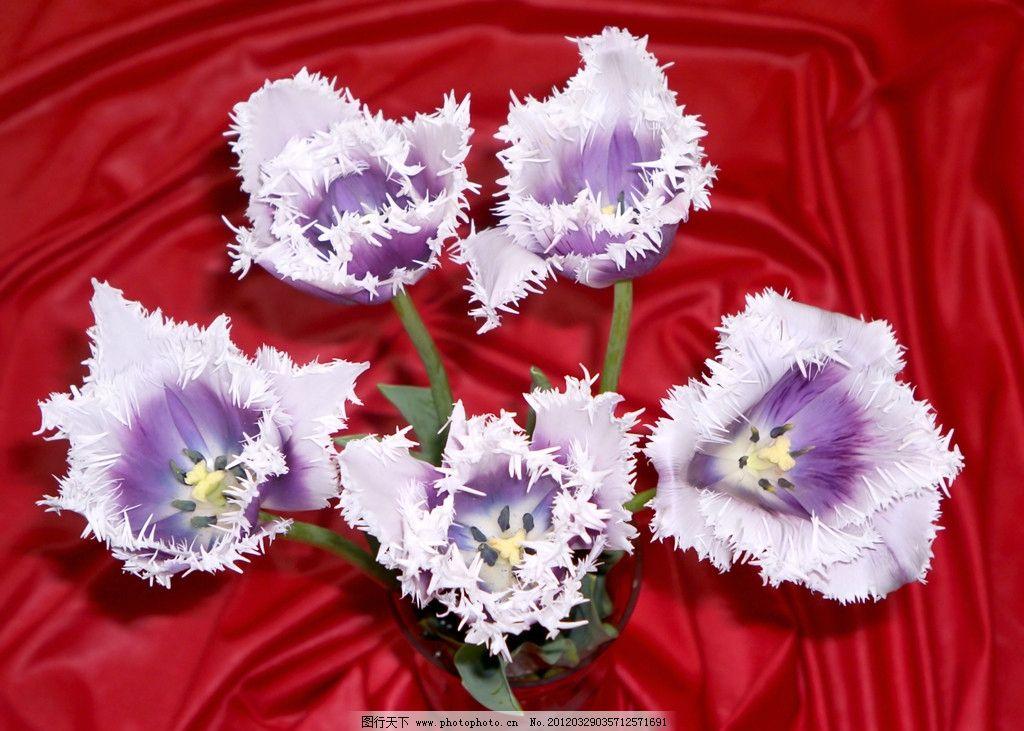 鲜花花朵 鲜花 花朵 花草 植物 小花 花草素材 生物世界 摄影 300dpi