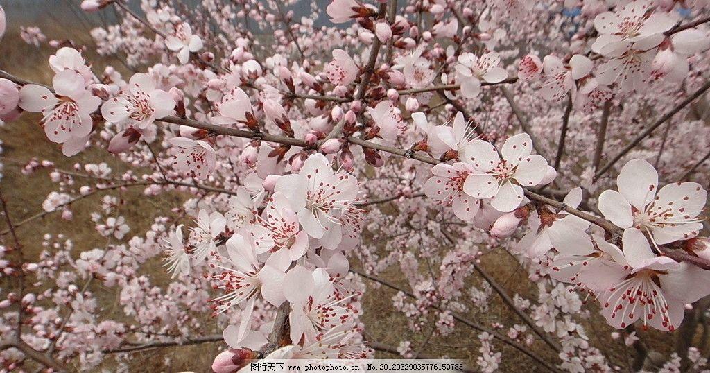 桃花情缘歌谱简谱