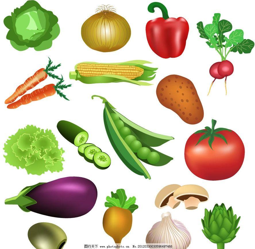 手绘蔬菜矢量 包头白 葱头