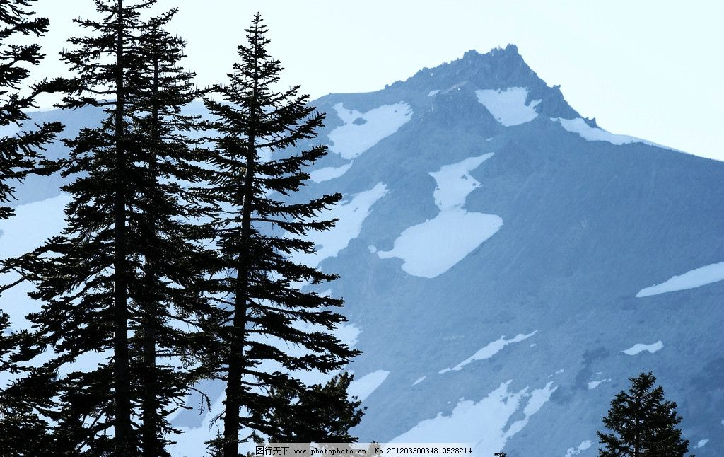 高山风光 高山 高原 风景 风光 景色 景观 树木 大树 松树 风光方面