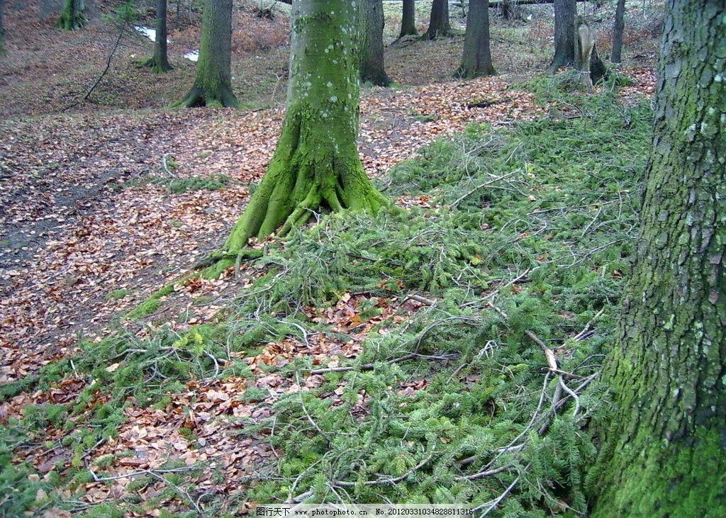 森林种植专用浇灌装置结构示意图