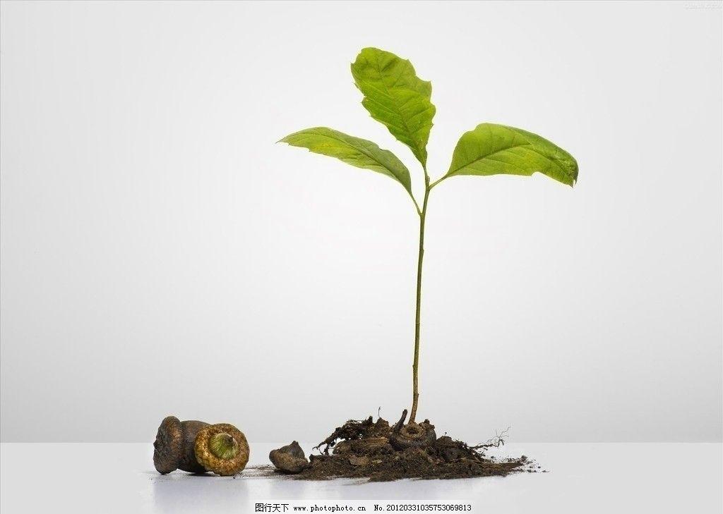 嫩绿小树 嫩芽 小树苗 生命之绿 花草 生物世界 摄影 300dpi jpg