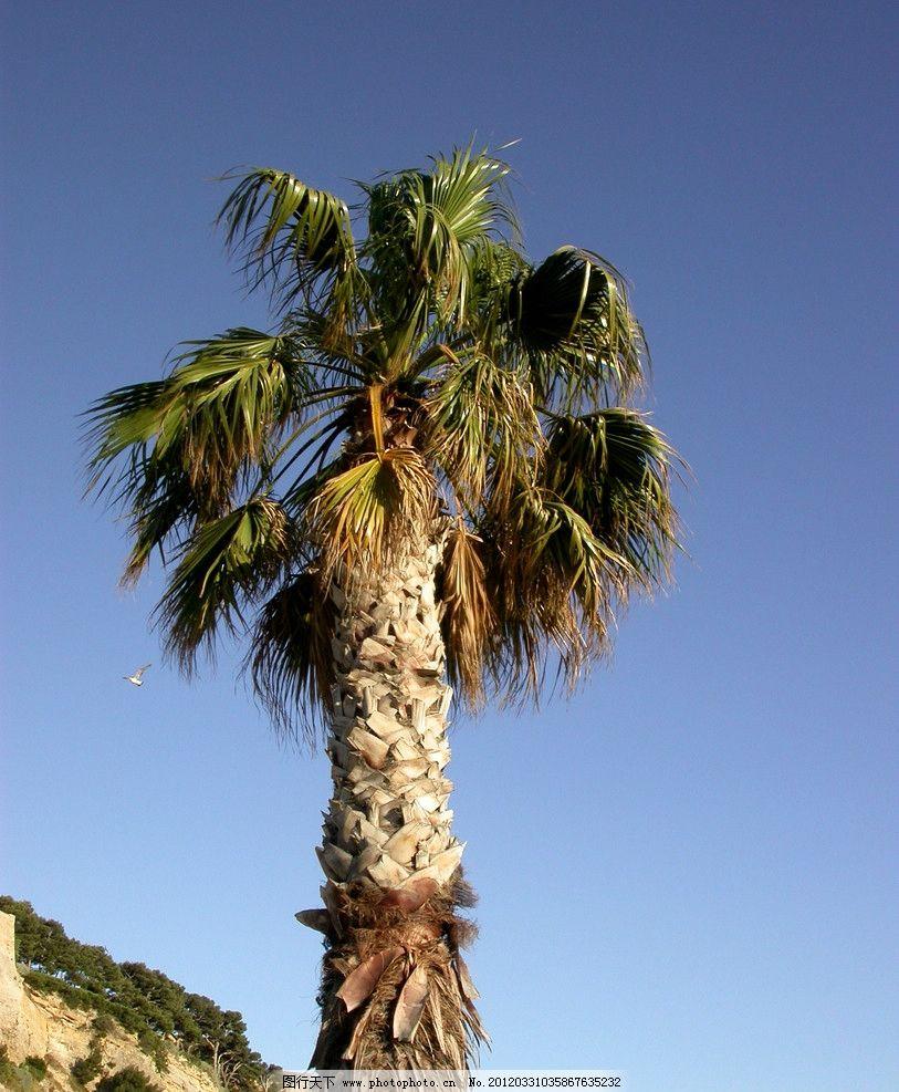 树木大树 树木 大树 植物 热带 特写 蓝天 树木树叶 生物世界 摄影